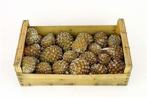 Afbeelding van Coriscaanse dennenappels per kist