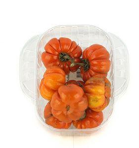 Picture of CB0132 Solanum