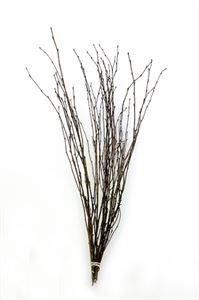 Afbeelding van Berkentakken naturel ( per bos ) a 10 tak