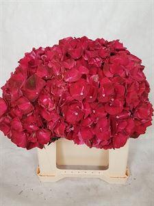 Afbeelding van Ruby red 40cm bl diam 18cm
