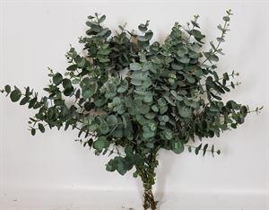 Afbeelding van Eucalyptus bosjes 200 gram